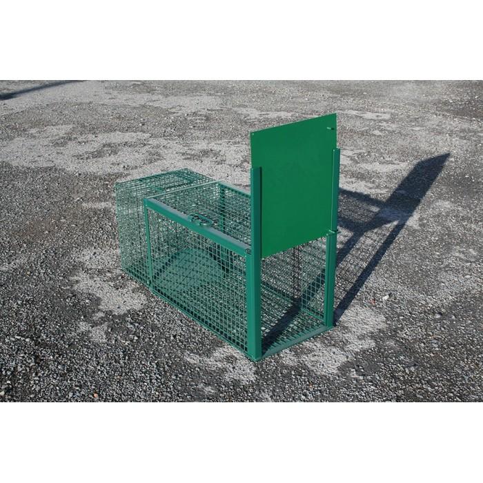 Cage piège pour raton laveur.