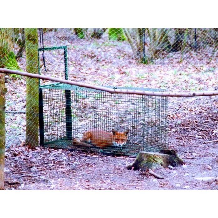 Cage piège pour Renard