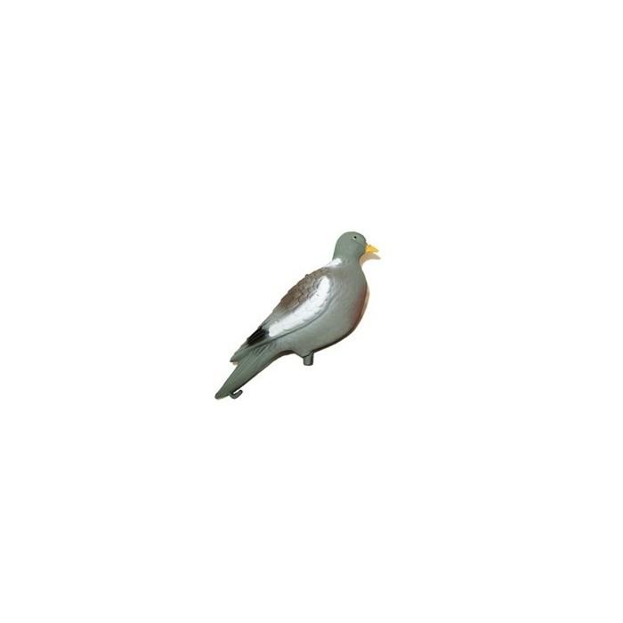 Forme de pigeon droit