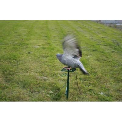 Palette à pigeon à pompe