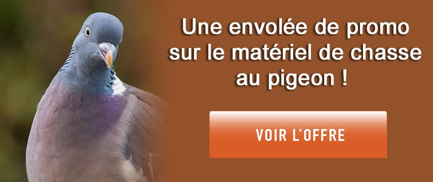 Promo chasse au pigeon